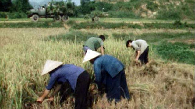 Les difficultés de l'après-guerre dans le Vietnam réunifié.