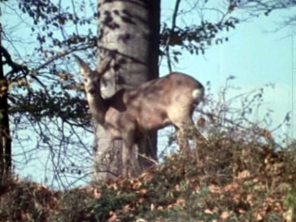 L'automne est une période de chasse dans les forêts du Jura.