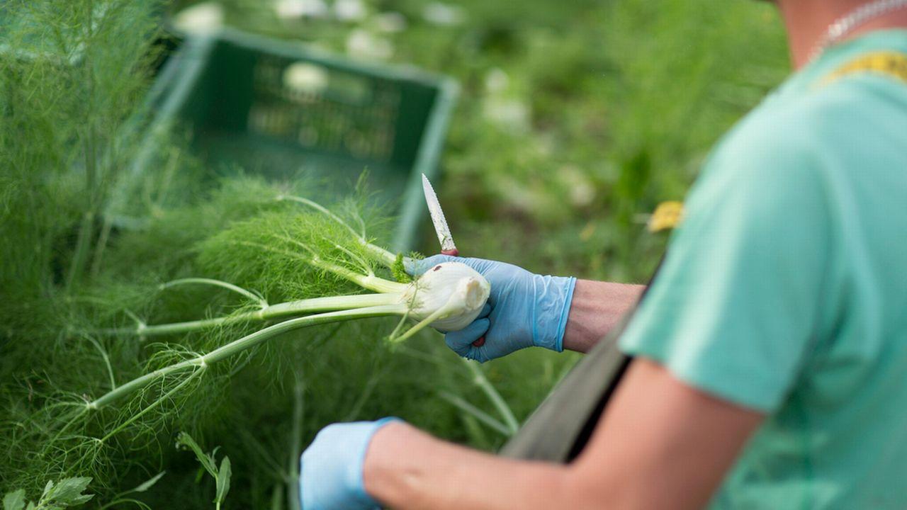 L'USP estime que l'intérêt est à la fois pour les requérants et pour l'agriculture. [Gaëtan Bally - Keystone]