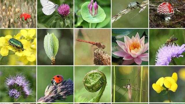 La biodiversité en Suisse continue de s'appauvrir. [Yü Lan]