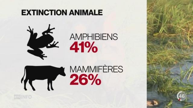 Biodiversité: l'homme se rend responsable de l'extinction de milliers d'espèces animales [RTS]