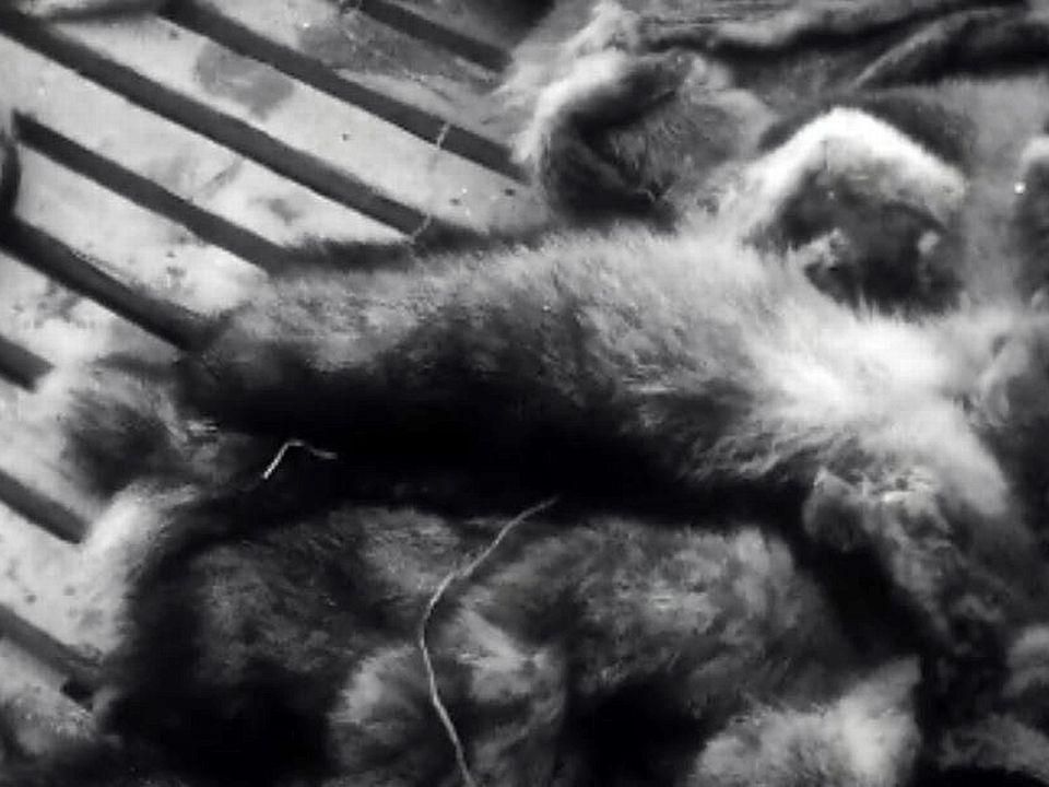 Une importante foire de fourrures se tient à Châlon-sur-Saone.