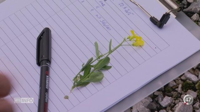 Bâle lutte contre la dissémination de graines de plantes OGM qui sont transportées à travers la Suisse [RTS]