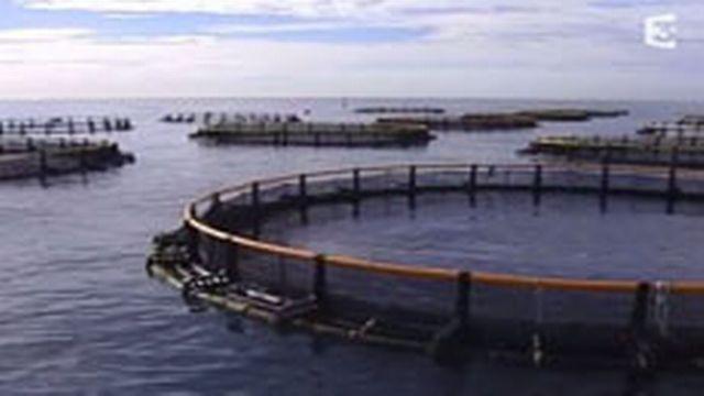 La pisciculture [vimeo.com]