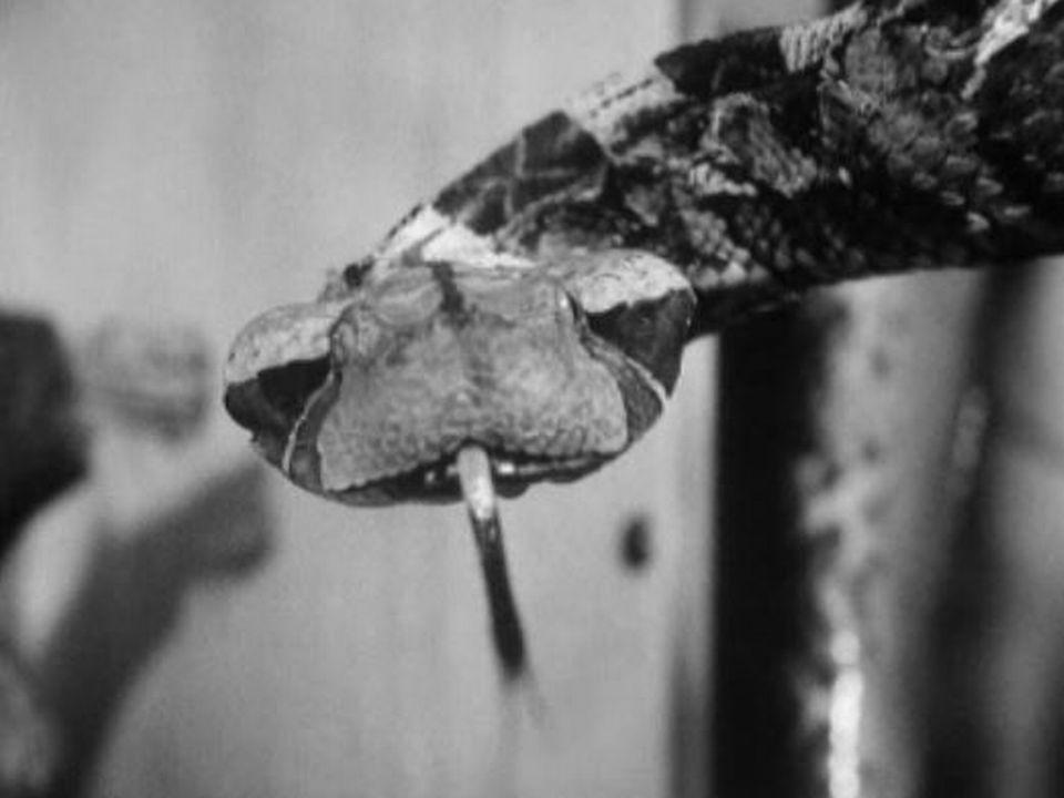 Exposition de reptiles et d'araignées à Genève, 1966. [RTS]