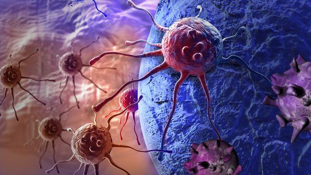 Cellules cancéreuses. [vitanovski - Fotolia]