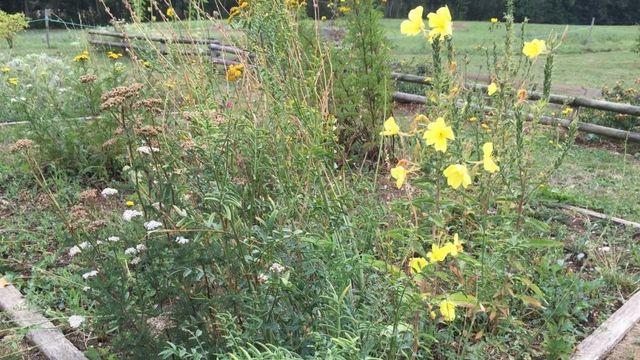 Un carré de prairie fleurie. [Isabelle Gendre  - RTS]