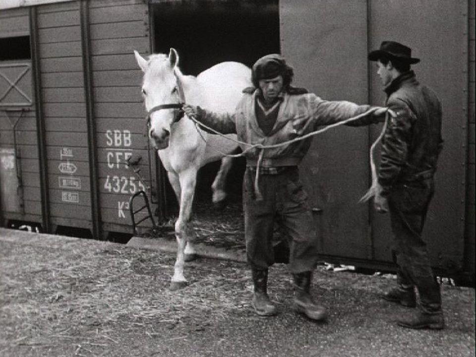 Arrivée à Genève des animaux du cirque Pilatus, 1954. [RTS]