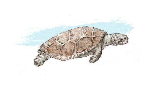 Représentation d'artiste d'une tortue marine littorale. Jurassica/ikonaut [Jurassica/ikonaut]
