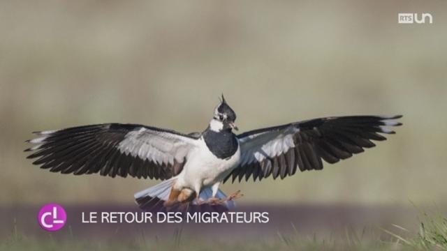 Le Grand-Marais, un paradis pour les oiseaux migrateurs [RTS]