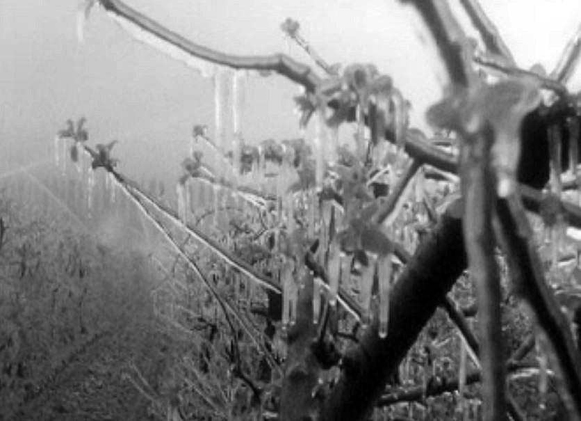 La lutte contre le gel carrefour - Comment proteger les arbres fruitiers du gel ...
