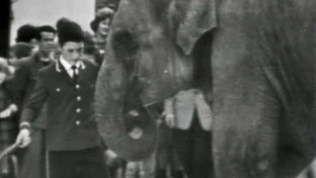 Le dressage des éléphants au cirque Knie, quelle grâce!