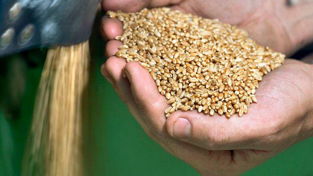 La spéculation sur les denrées alimentaires nuit aux exploitations agricoles, y compris en Suisse. [Gaetan Bally]