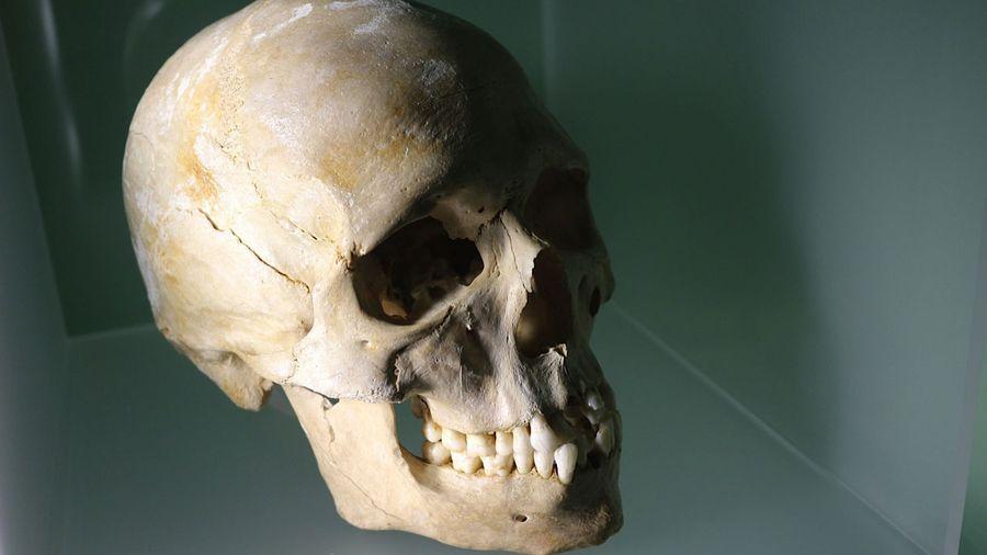 Un squelette de chasseur azilien (Paléolithique final) découvert dans la grotte du Bichon à La Chaux-de-Fonds (Suisse) offre de nouvelles indications sur les populations à l'origine des Européens actuels. 5864567