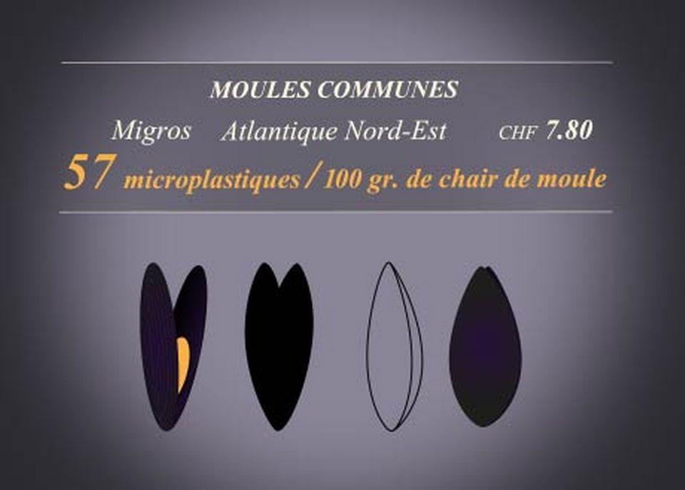 Moules communes [RTS]
