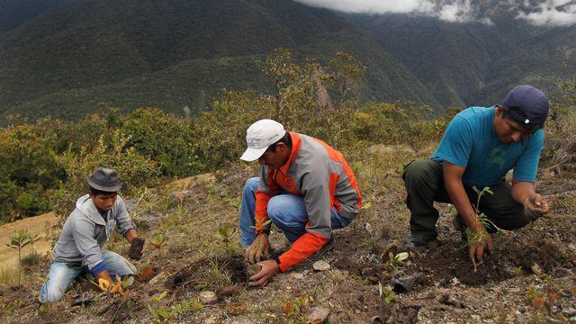 L'efficacité de le reforestation de l'Amazonie pour limiter les émissions de CO2 est remise en doute. [Enrique Castro-Mendivil - Reuters]