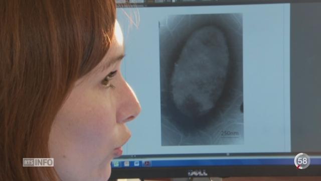 Le froid et une bactérie intestinale particulière pourraient influencer notre poids [RTS]