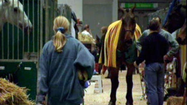 Travail des grooms équestres lors d'un concours hippique en 1998. [RTS]