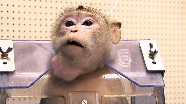 Pourra-t-on un jour se passer complètement de l'expérimentation animale?  [RTS]