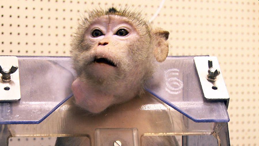 Pourra-t-on un jour se passer complètement de l'expérimentation animale?