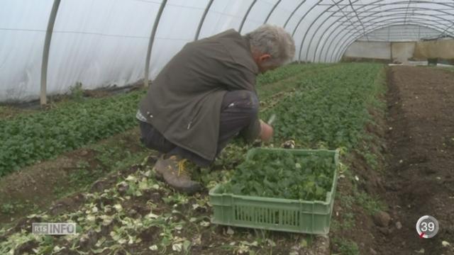 Le Conseil fédéral lance sa campagne contre l'initiative sur la spéculation sur les denrées alimentaires [RTS]