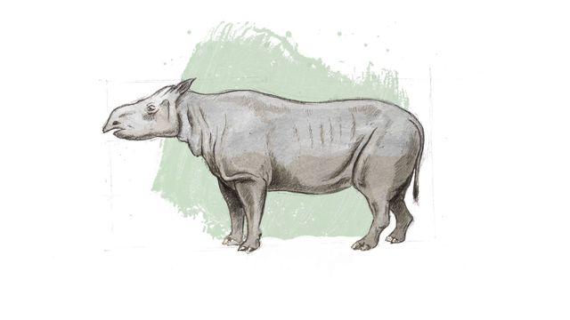 Représentation d'artiste de Molassitherium delemontense, un rhinocéros delémontain. [ikonaut - Jurassica]