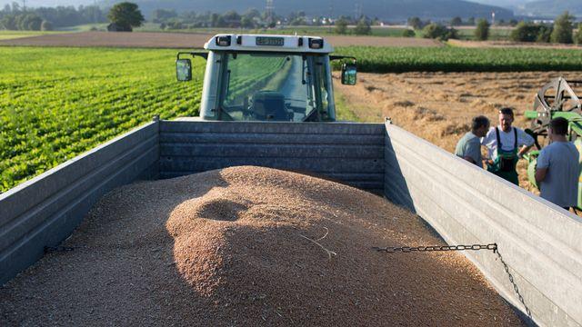 L'initiative voulait empêcher les effets spéculatifs sur le marché des produits alimentaires, par exemple le blé. [Gaetan Bally - KEYSTONE]