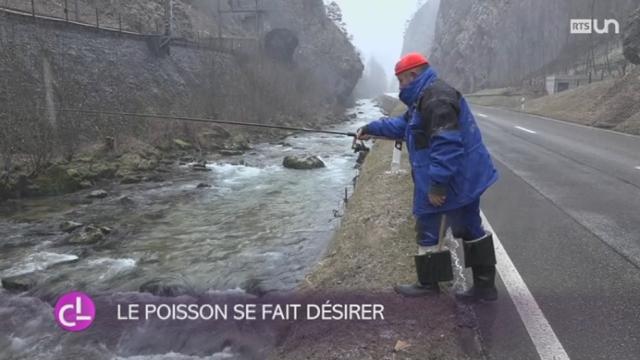 BE: les poissons sont moins nombreux dans les rivières bernoises [RTS]