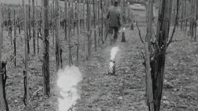 Chaufferettes pour vignes contre le gel en Thurgovie en 1963. [RTS]