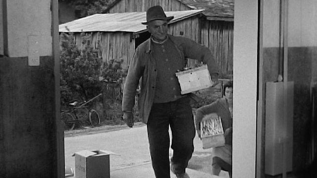 Producteur d'asperges, Valais, 1959. [RTS]
