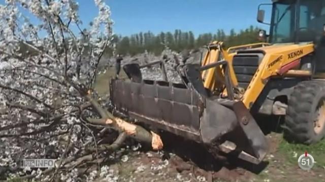 France: des producteurs de cerises protestent contre l'interdiction d'un pesticide [RTS]