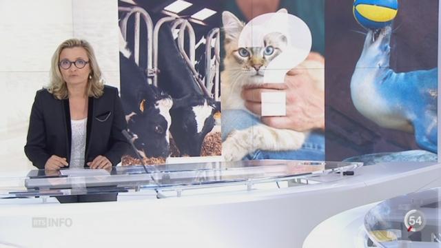Respect des animaux dans les abattoirs: le point avec Martina Chyba [RTS]