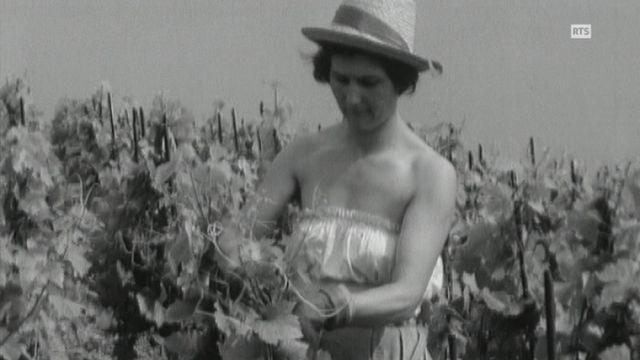Les soins à la vigne [RTS]