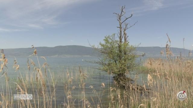 Minimag: la Grande Cariçaie héberge un quart de la flore et de la faune suisse [RTS]