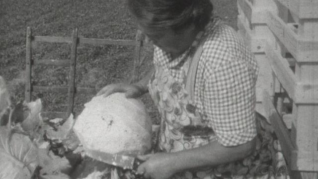 Savez-vous cultiver les choux? [RTS]