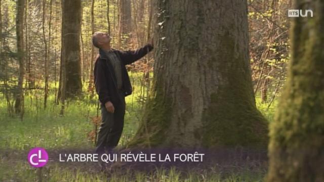 Un bois du canton de Thurgovie a remporté le Prix Suisse de la forêt [RTS]