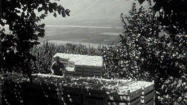 Abricots du Valais, 1961. [RTS]