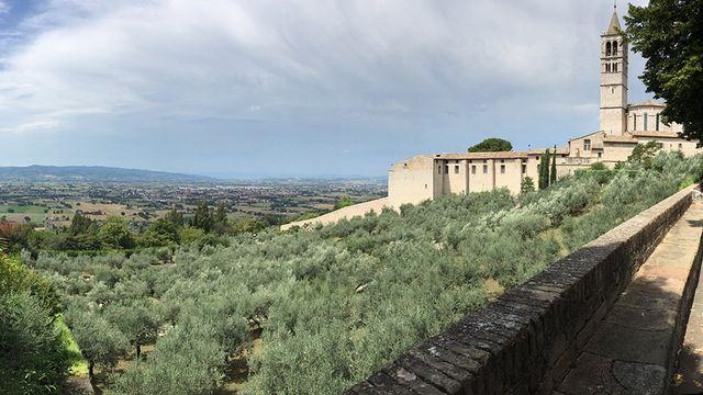 Un champ d'oliviers à Assise. [Shaula Fiorelli Vilmart - Mathscope]