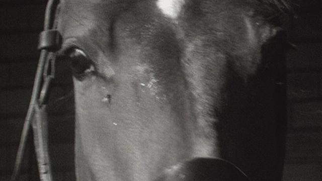 A Saignelégier c'est la fête du cheval des Franches-Montagnes en 1969. [RTS]
