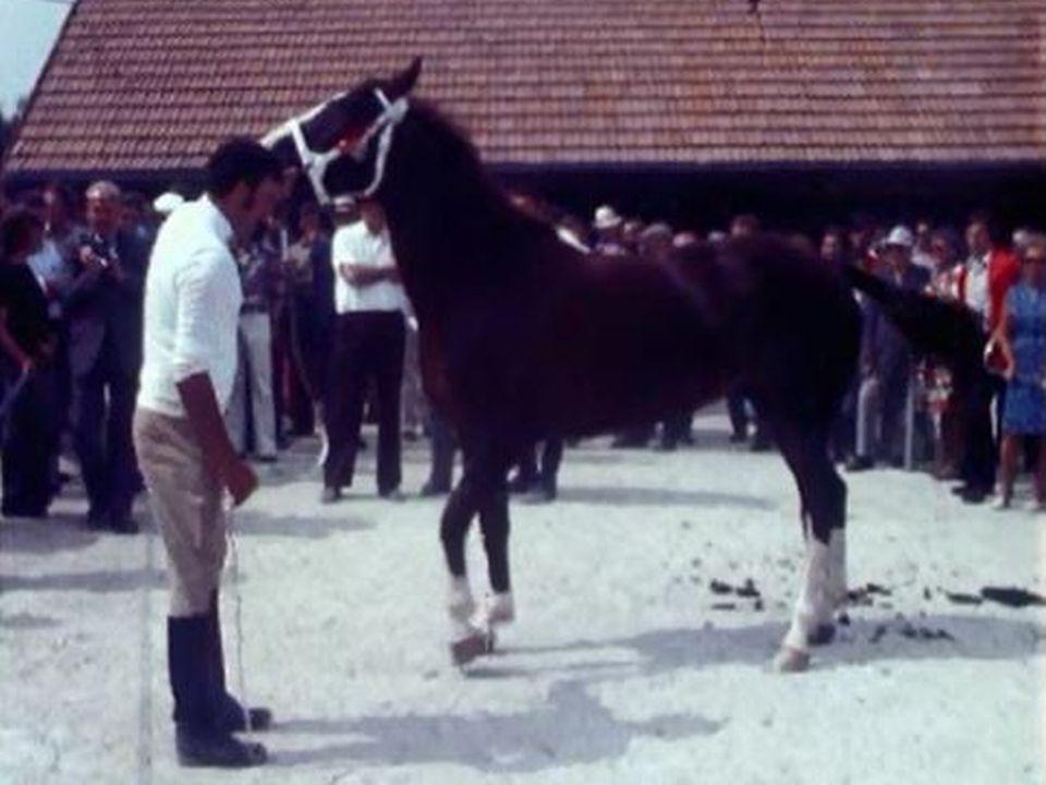 70e édition du marchà-concours de chevaux des Franches-Montagnes en 1973. [RTS]