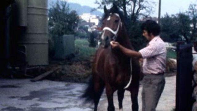 L'étalon Judoka est attendu comme une star à Saignelégier en 1977. [RTS]