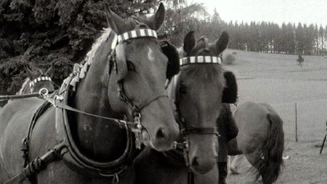 Le marché-concours de Saignelégier en 1966. [RTS]