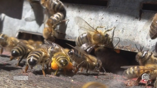 Une nouvelle génération de pesticides est la cause de la mortalité des abeilles [RTS]