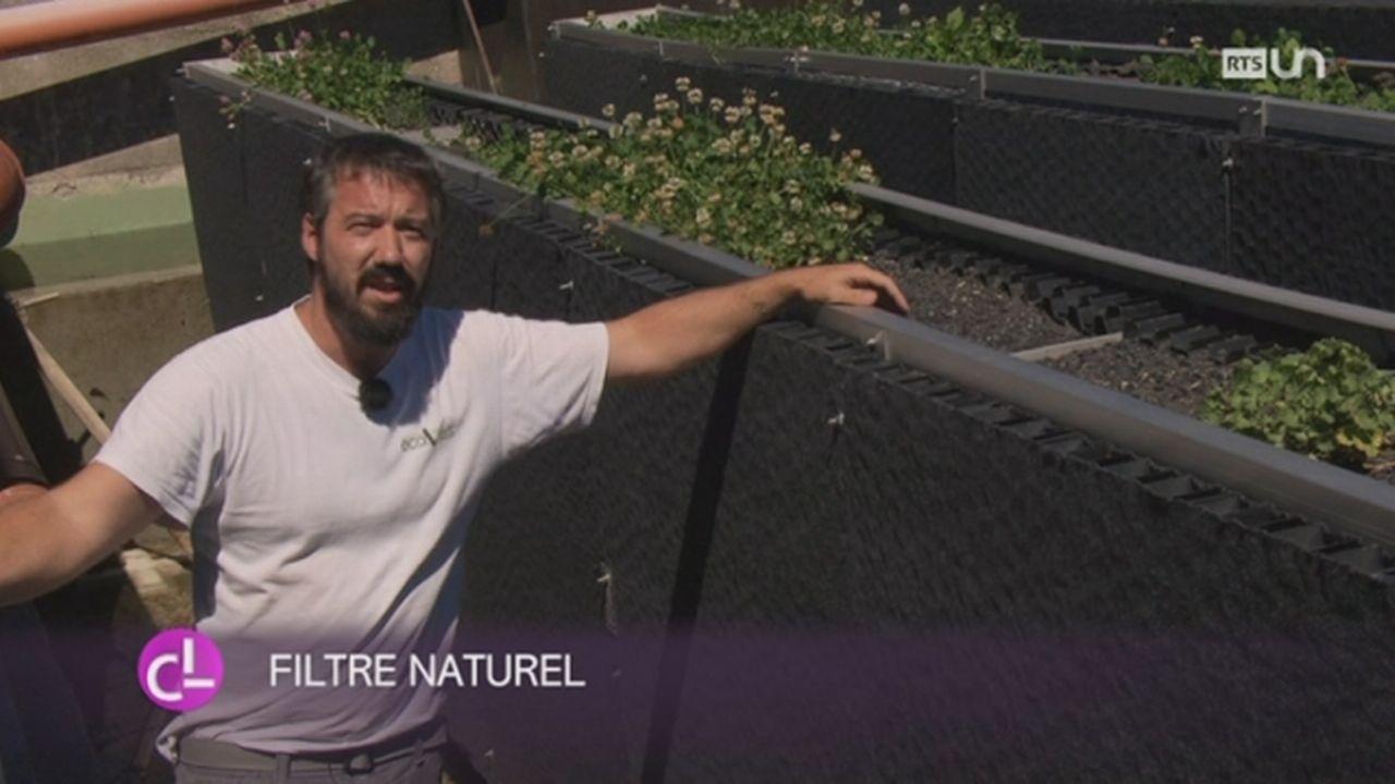 VD: la commune de Vinzel va utiliser des murs filtrants pour assainir naturellement les eaux [RTS]