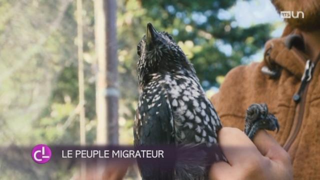 VD: civilistes et bénévoles se relaient pour baguer les oiseaux migrateurs [RTS]