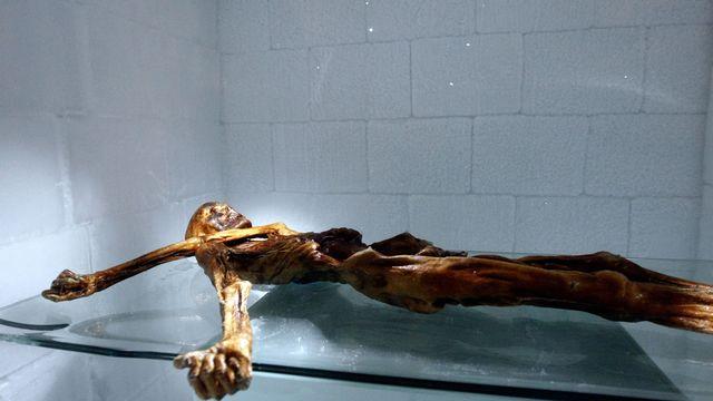 La momie de l'homme des glaces Ötzi, au musée d'archéologie de Bolzano le 28 février 2011. Andrea Solero AFP [Andrea Solero - AFP]