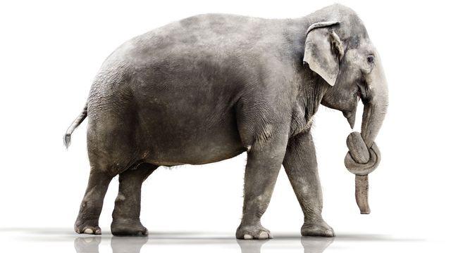 Les éléphants ont-ils des trucs pour ne pas oublier? Werner Dreblow Fotolia [Werner Dreblow - Fotolia]