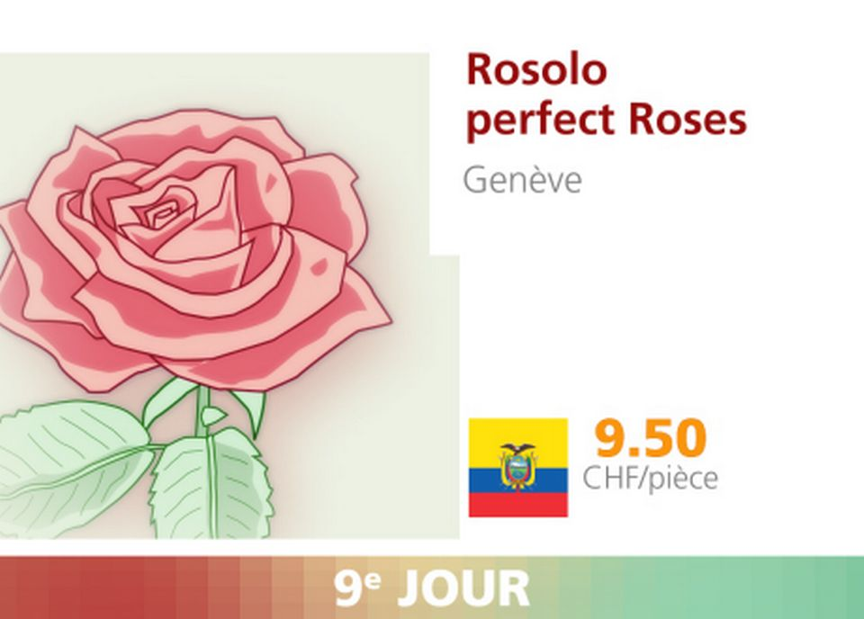 Rosolo perfect Roses. [RTS]