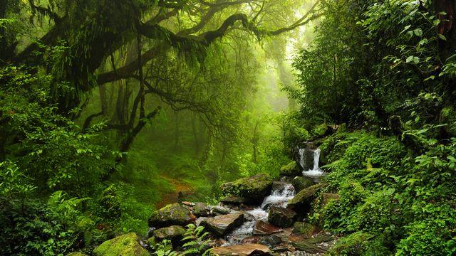 Les forêts jouent un rôle thermo régulateur. [quickshooting - Fotolia]