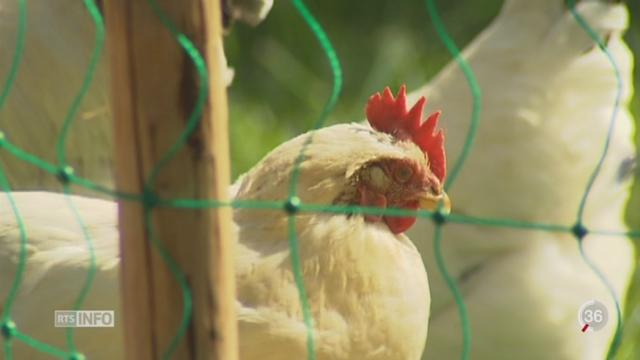 La Suisse prend des mesures pour lutter contre la grippe aviaire [RTS]